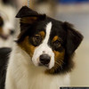 March 31 - We saw Lucas, Jake's brother, at the Greater Monroe Kennel Club dog show!