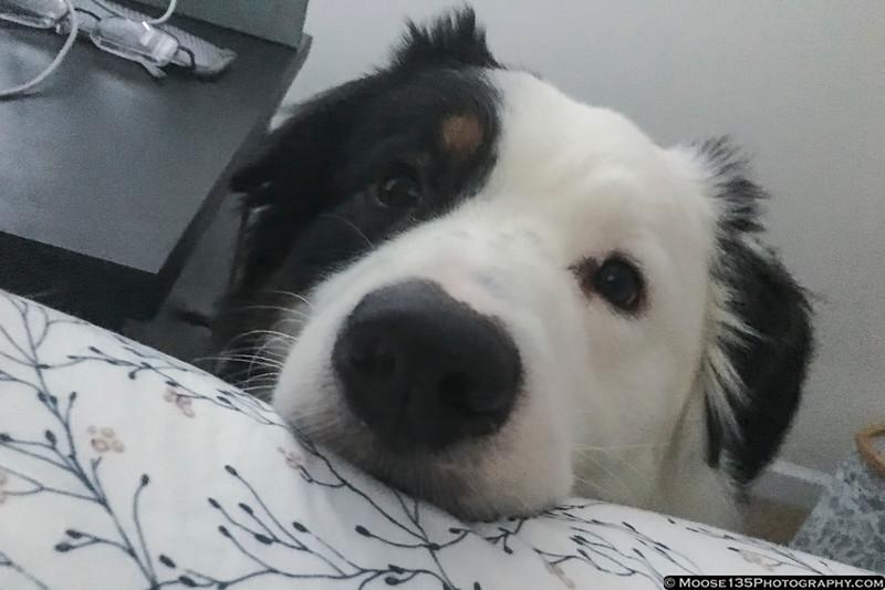 November 23 - Time to get up, Dad!