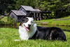 September 6 - Another day, another adventure for Jake - a visit to Mabry Mill on the Blue Ridge Parkway.