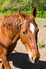 April 4 - Stopping by to see the horses at a local stables.