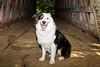 September 5 - Jake visits the Bunker Hill Covered Bridge
