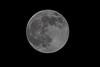 April 26 - Pink Moon