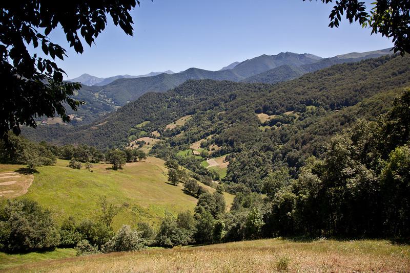 Lush canopy of Mediterranean oaks