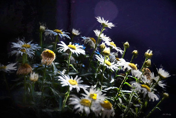 The Daisies