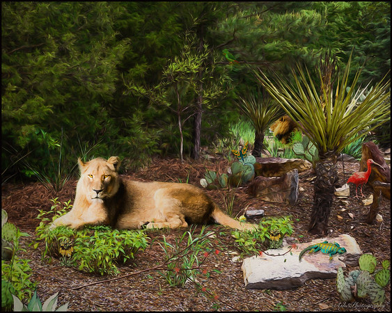 Zoo Landscape