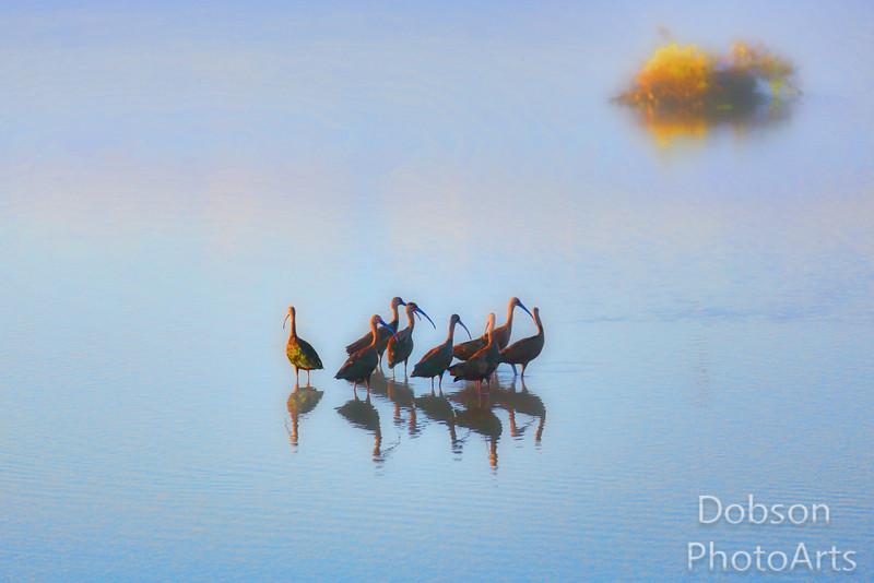 Ibises at Dawn