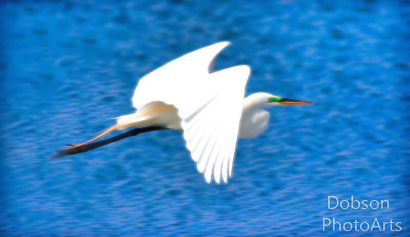 Egrets  - In My Dreams