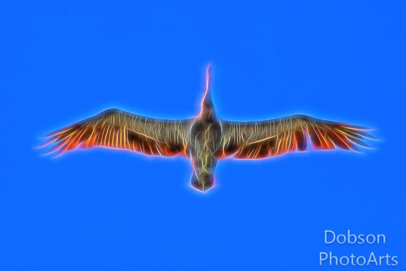 Electric Pelican