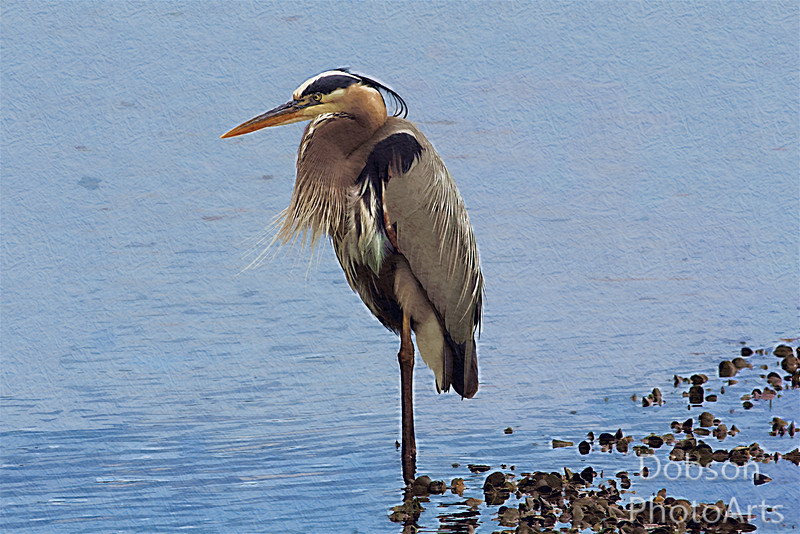 Great Blue Heron Photo-painting