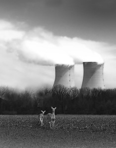 nuclear reactors and deer, nuclear reactors and deer