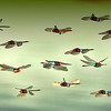 Dragonfly Jamboree