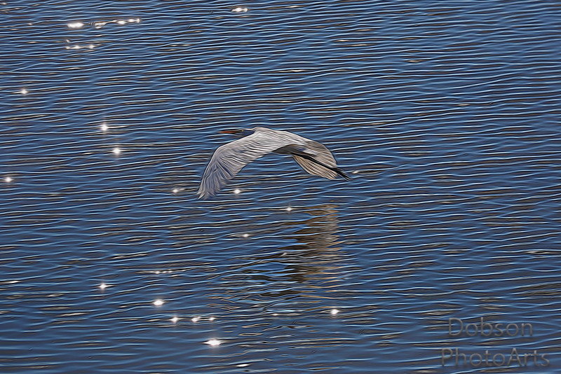 Reflections on a White Egret