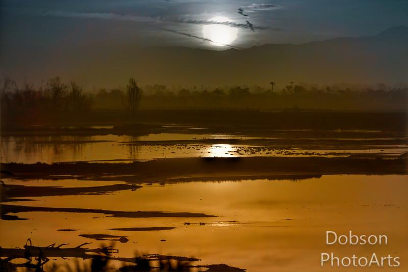 Ducks in The Morning Haze