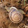 Snail Tail