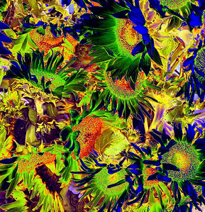 Eclectic abstract - Sunflowers