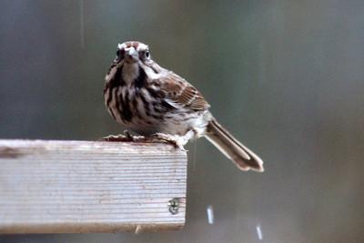 2/6 - It's Raining Wren