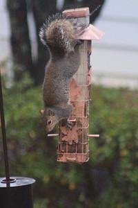 1/16 - Squirrel Proof?