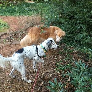 8/27 - National Dog Day