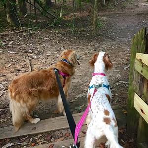 9/6 Trail Buddies