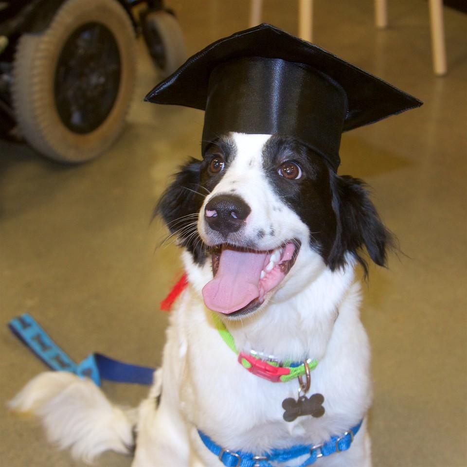 7/1 - Harry Graduates!