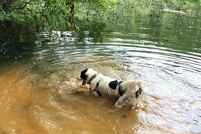 8/3 - Muddy Water