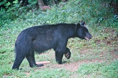 8/19 - Big Bear
