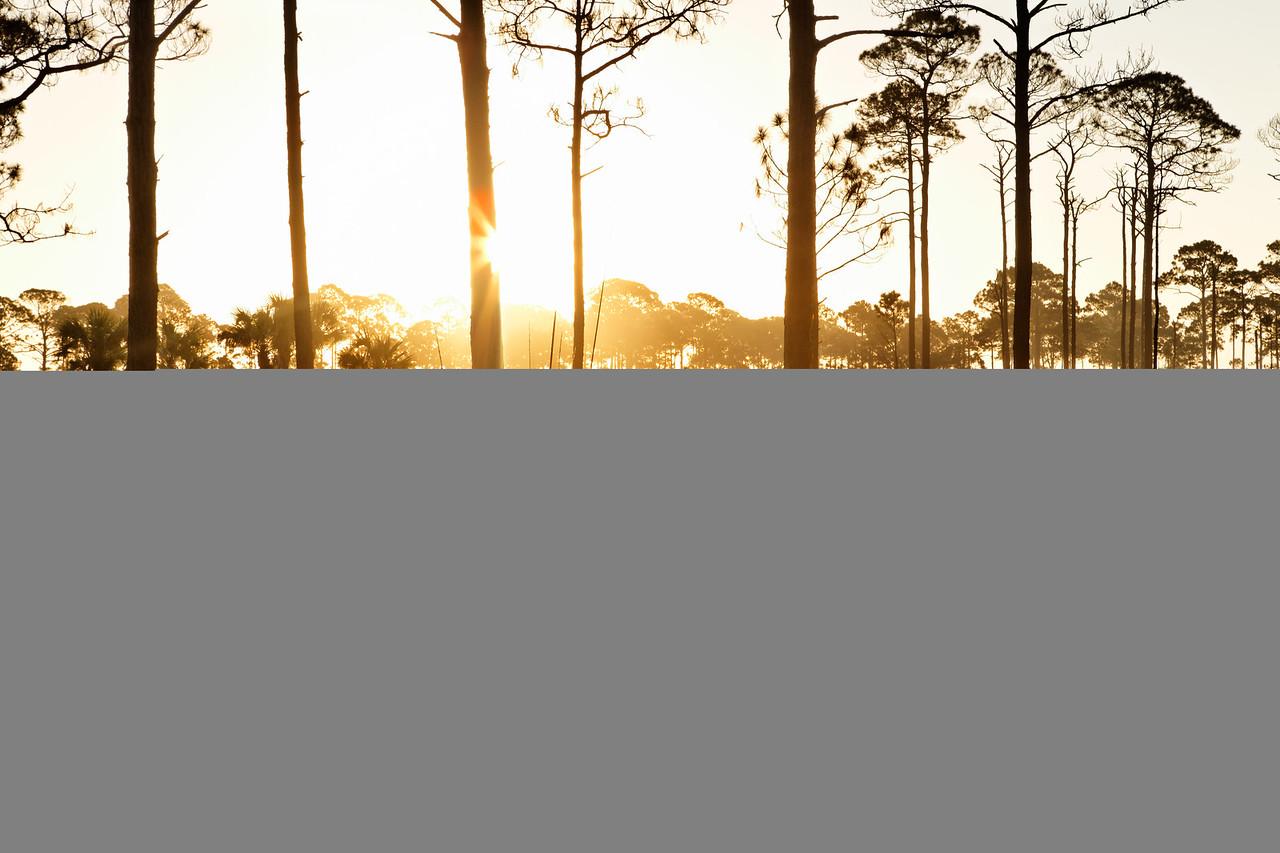 Cattail Sunrise - Sun blasts through the fall meadow