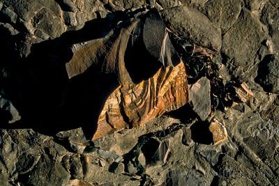 Bonny Doon Beach Rock Textures 1