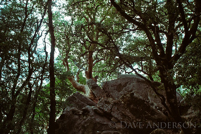 Castle Rock Park Tree in Crack 2 (1993)