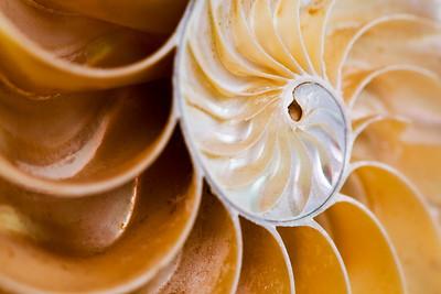 95/365 Golden Spiral