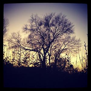 342/365 Sunset Silhouette