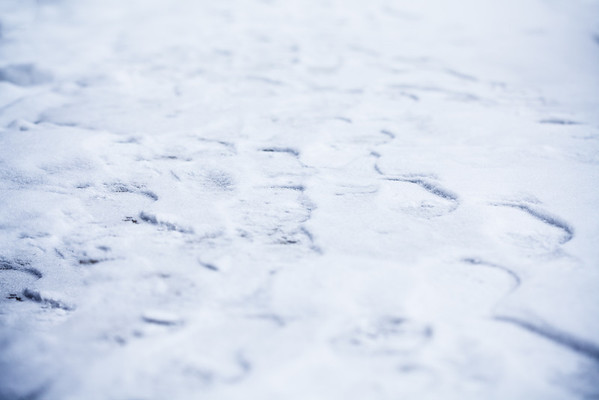 11/365 Snow Wisdom - http://365.greatproj.com/2011/01/snow-wisdom/