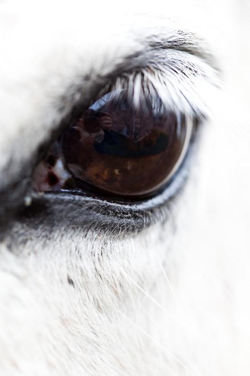 18/365 I'm Eye'n You