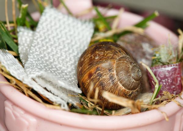 163/365 Snail Pet