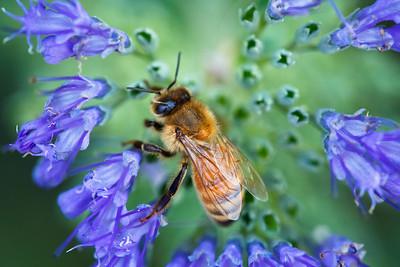 250/365 Bee-utiful