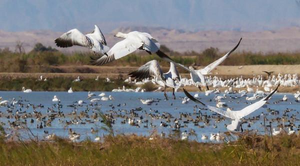 2012 Salton Sea