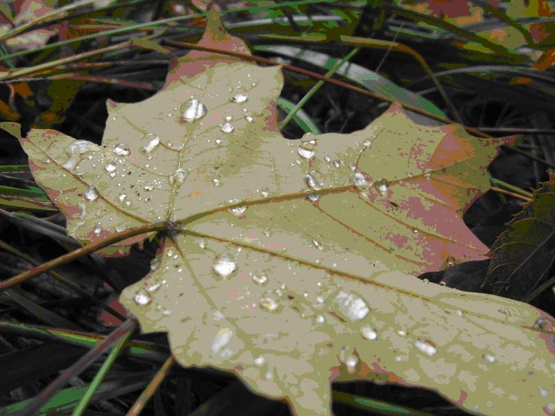 Winner 2008 - Nature - Warren Brandes