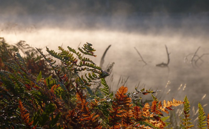 Misty Morning on Grace Lake, Killarney Prov Park. by Andrea Chappel