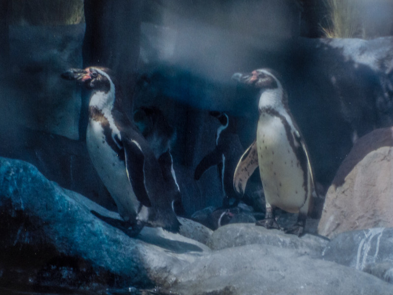 Penguins by Harry Fox