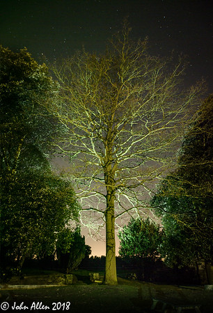 LIT TREE by JOHN ALLEN.