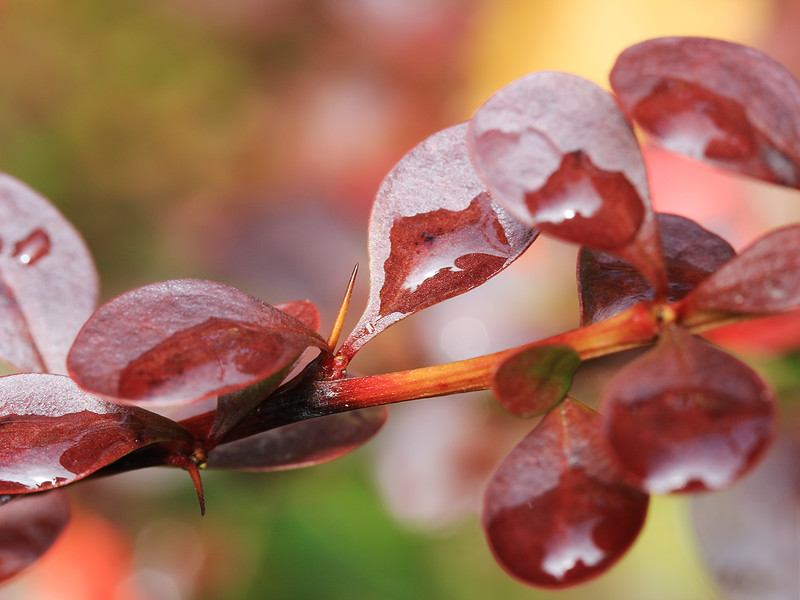DROPLETS ON THE LEAVES by Alex Taylor