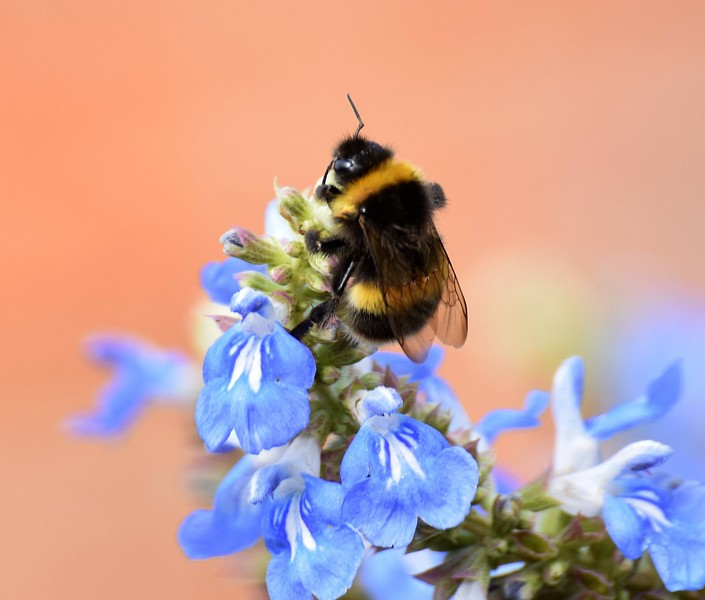 BEE IN THE GARDEN by Colin Wright