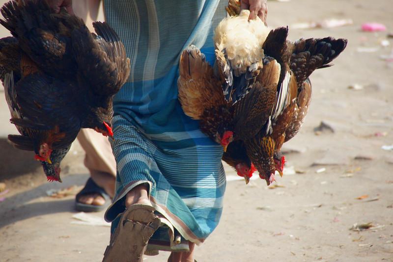 A close-up shot of a man hauling several live birds in both of his hands - Old Dhaka, Bangladesh.