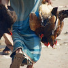 A close-up shot of a man hauling several live birds in both of his hands - Old Dhaka, Bangladesh.