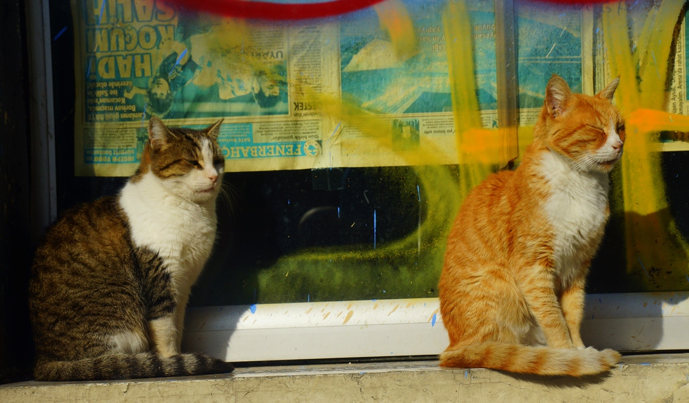 Two cats are always better than one ;)