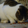 Nearby the Blue Mosque and Hagia Sofia, was a designated feeding area for the cats where tasty cat treats were scattered for them.