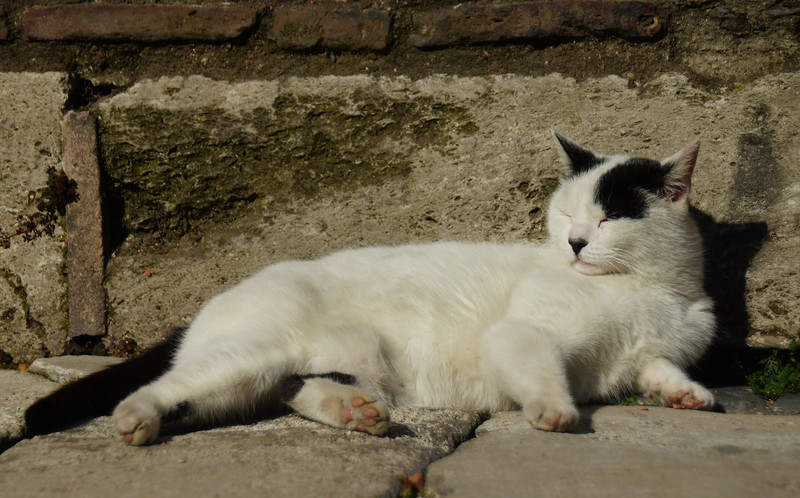 This white and black cat was basking in the sunlight.