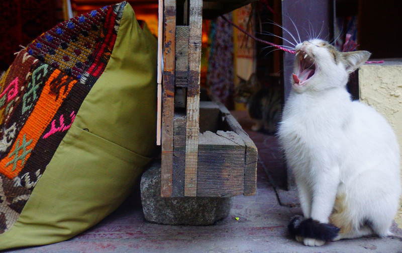 It's just that kind of day!  A cat yawning just outside of a small shop.