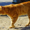 This gorgeous cat with a marmalade coat was likely looking for a few scraps of food or somebody to give it attention and affection.