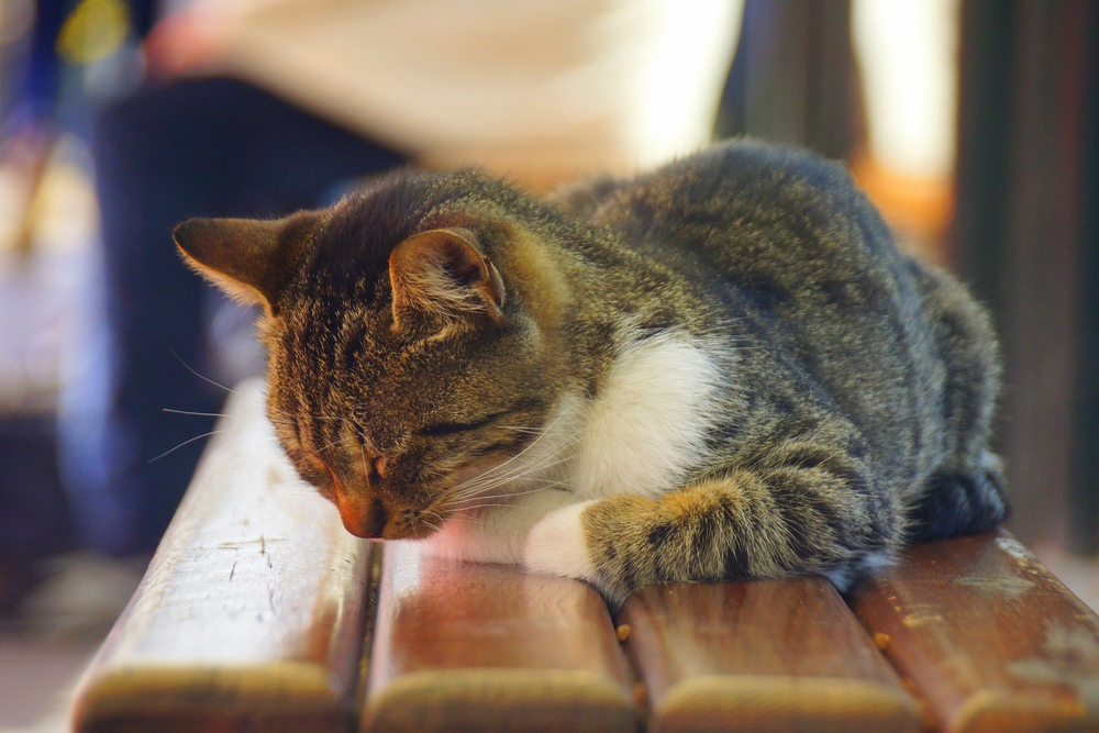 This gorgeous cat was sound asleep on the bench as we waited to catch the Light Metro.